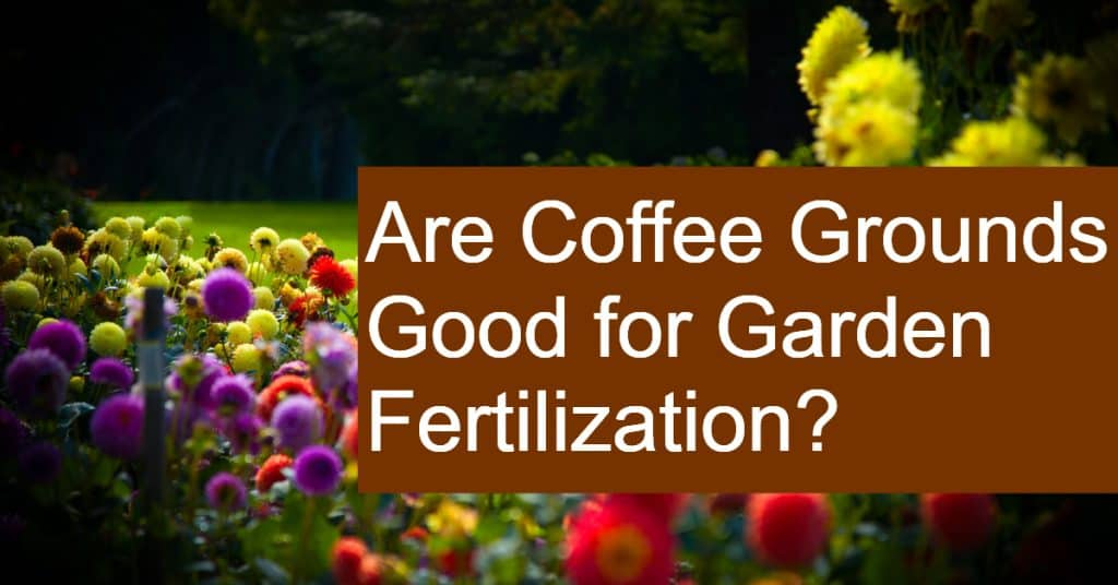 Are Coffee Grounds Good for Garden Fertilization and to keep pests at bay?